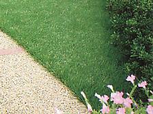 芝生貼り込み
