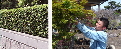 庭木の剪定・消毒